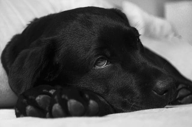 A férgesség jelei kutyáknál
