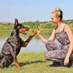 A kutyák képesek felismerni az emberi érzelmeket 150x150 - A kutyák képesek felismerni az emberi érzelmeket!