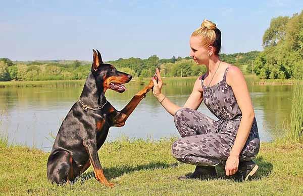 A kutyák képesek felismerni az emberi érzelmeket!