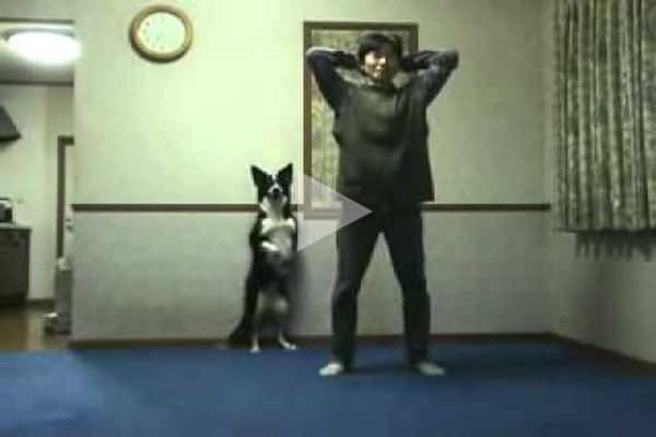 A kutya minden mozdulatát lemásolja a gazdinak - A kutya minden mozdulatát lemásolja a gazdinak!