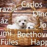 kutyanevek 150x150 - Kan kutyanevek listája Á-tól Z-ig