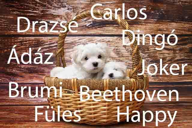 Kan kutyanevek listája Á-tól Z-ig