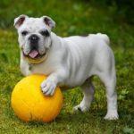 Hogyan hozd ki kutyádból a legjobbat 150x150 - Hogyan hozd ki kutyádból a legjobbat?