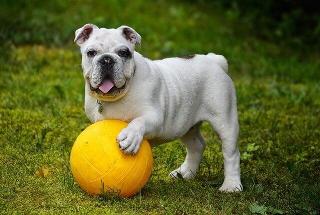 Hogyan hozd ki kutyádból a legjobbat?