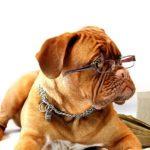 Hogyan válasszuk ki a legjobb kutyaidomárt kedvencünknek 150x150 - Hogyan válasszuk ki a legjobb kutyaidomárt kedvencünknek?