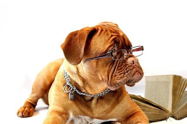 Hogyan válasszuk ki a legjobb kutyaidomárt kedvencünknek?
