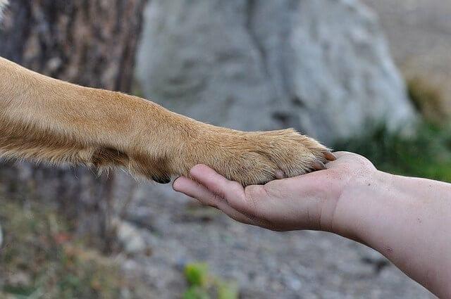 Hogyan válasszuk ki a számunkra megfelelő kutyafajtát - Hogyan válasszuk ki a számunkra megfelelő kutyafajtát?