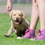 Készen állsz egy kutya örökbefogadására 150x150 - Készen állsz egy kutya örökbefogadására?