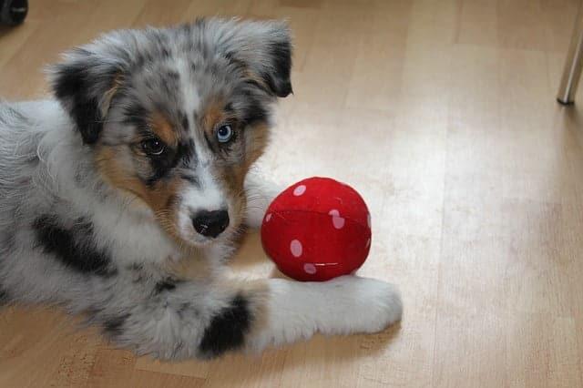 Milyen felszerelésekre van szükség a kutyatartáshoz - Néhány tipp, hogy kutyád keresse meg és hozza vissza a dolgokat