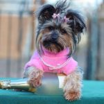 Nőstény kutyanevek listája Á tól Z ig 150x150 - Nőstény kutyanevek listája Á-tól Z-ig