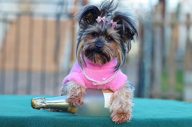 Nőstény kutyanevek listája Á tól Z ig - Nőstény kutyanevek listája Á-tól Z-ig