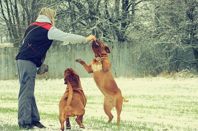 Hogyan neveljünk barátságos kutyát?