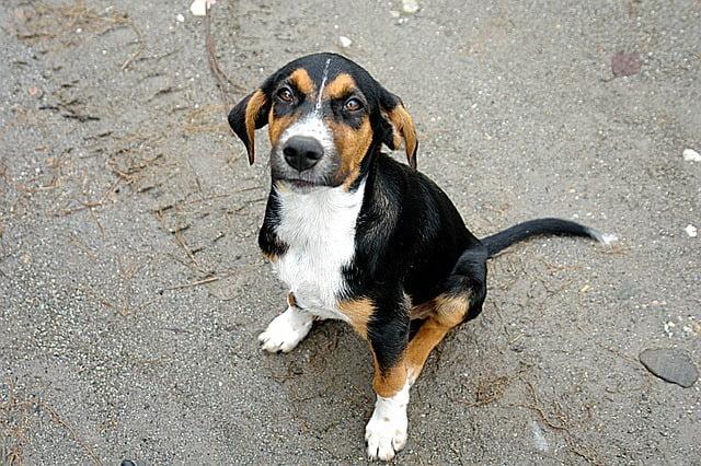 Hogyan tanítsd meg a kutyádat az alapdolgokra 1 - Hogyan tanítsd meg a kutyádat az alap dolgokra?