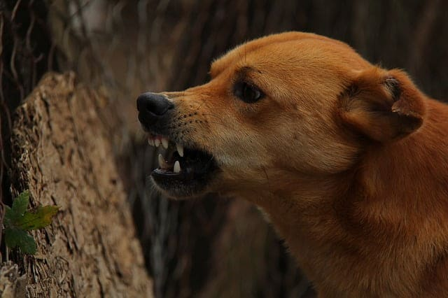 Néhány dolog, amit kutyusaink nagyon nem szeretnek