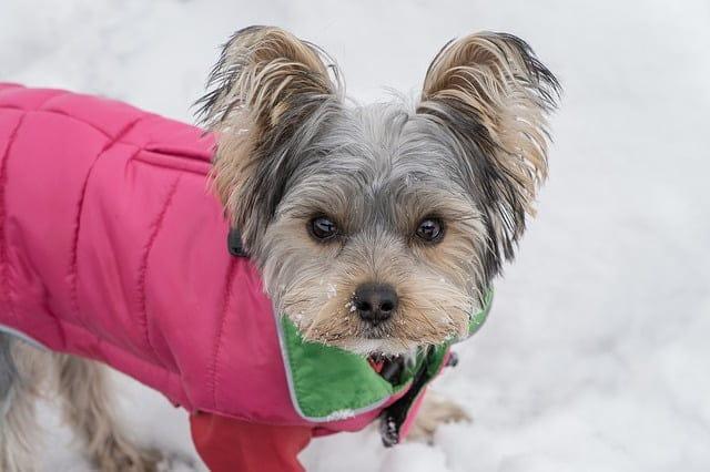 Télen se fázzanak kutyusaink!