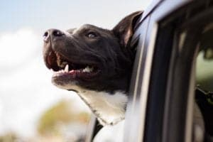 Igy utazzunk kutyaval 300x200 - Így utazzunk kutyával