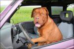 Igy utazzunk kutyaval1 150x100 - Így utazzunk kutyával