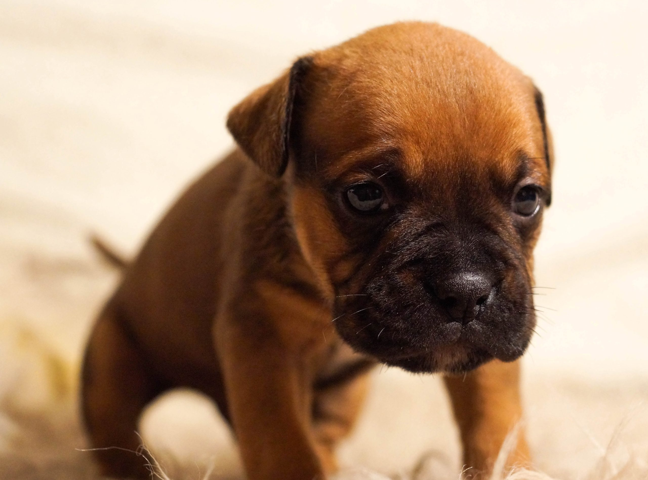 A kutya depresszio okai tunetei es kezelese - A kutya depresszió okai, tünetei és kezelése