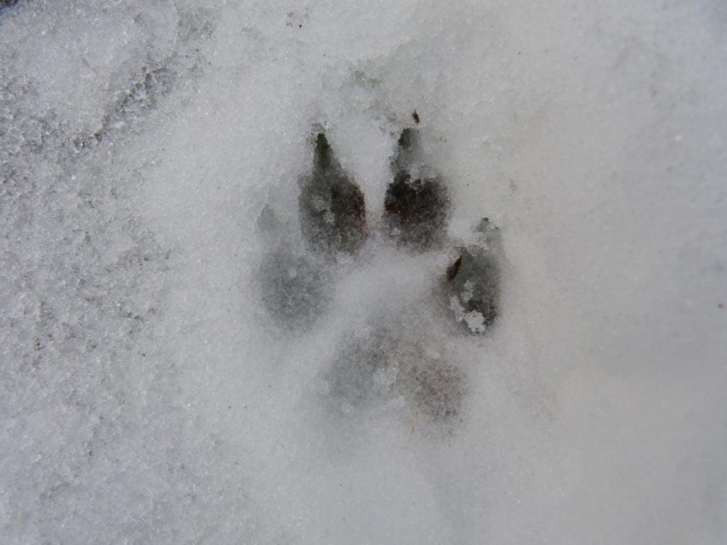 Igy ovjuk meg kutyankat a hideg ellen 1024x768 - Így óvjuk meg kutyánkat a hideg ellen