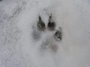 Igy ovjuk meg kutyankat a hideg ellen 300x225 - Így óvjuk meg kutyánkat a hideg ellen