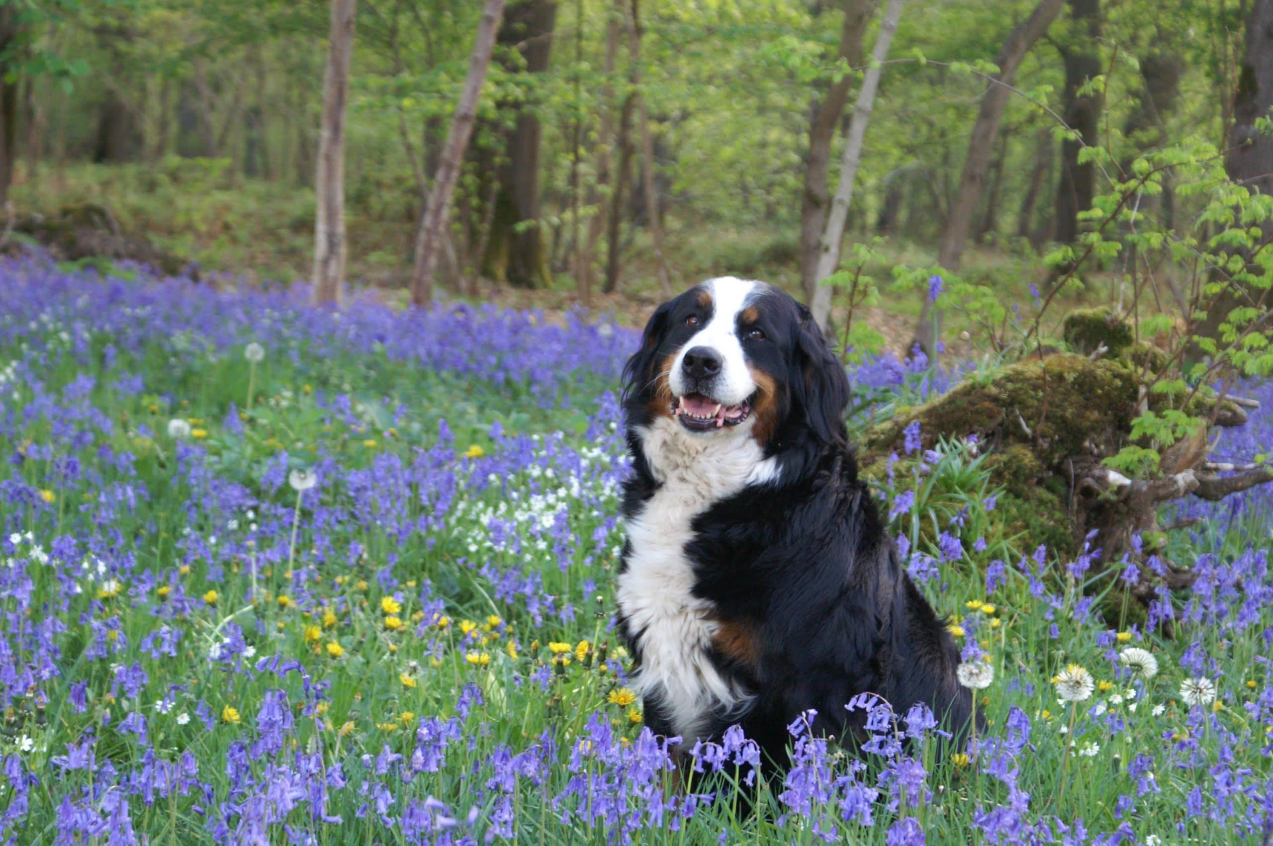 Milyen tavaszi veszélyek fenyegetik kutyáinkat?