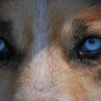 Kutya Blog – legújabb bejegyzések