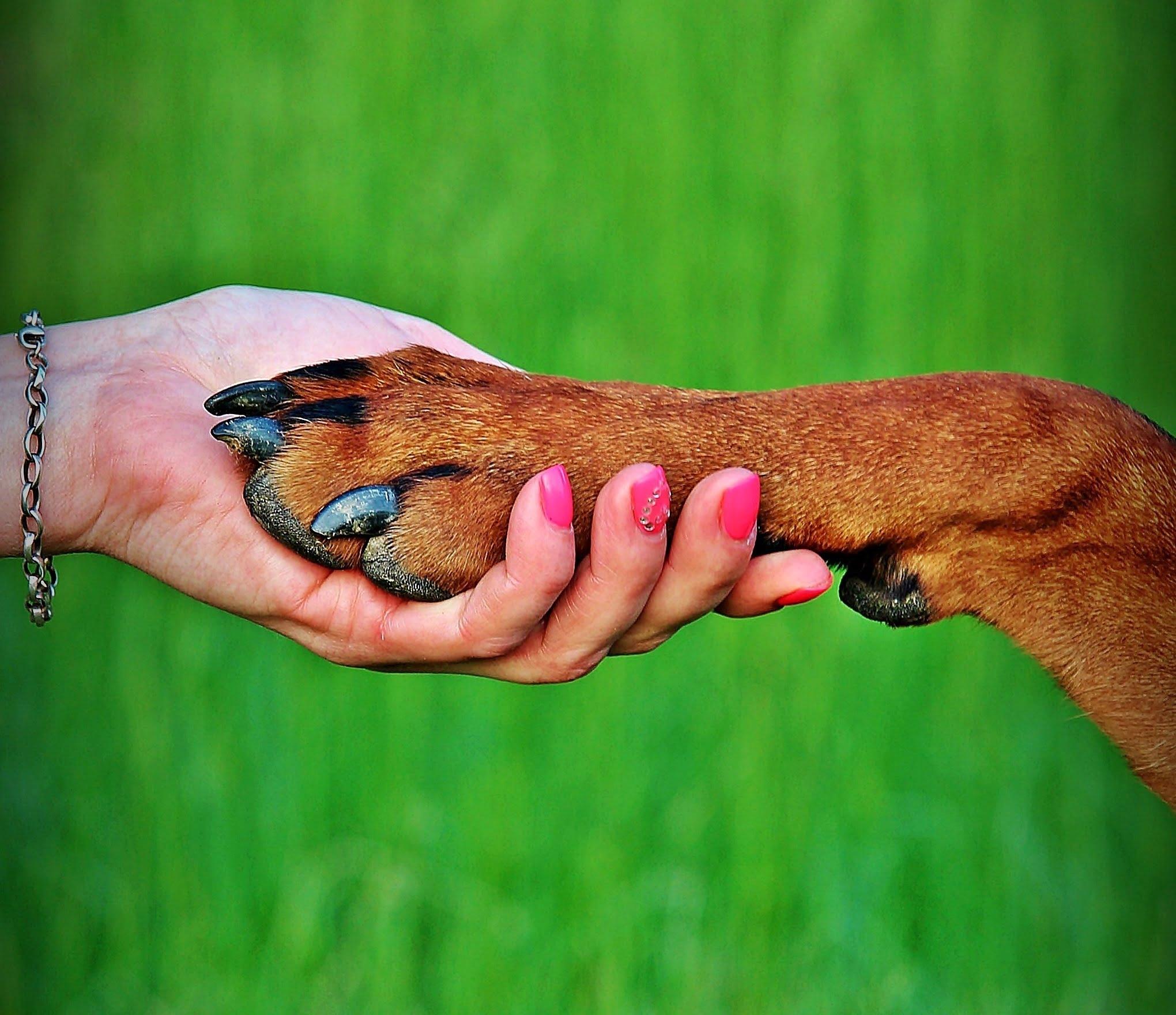 Tippek a zöld kutyatartáshoz