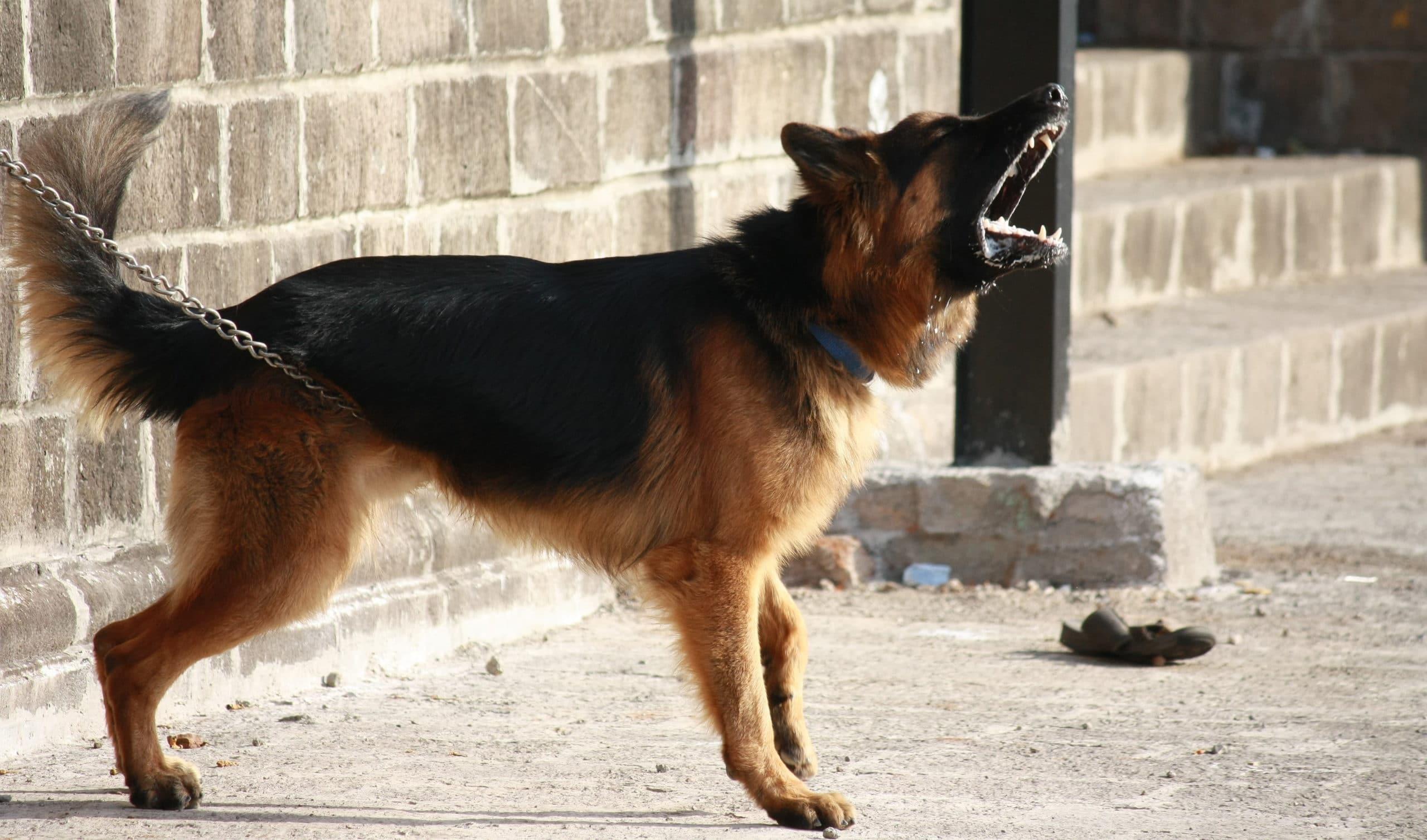 Mit tegyünk, ha megállás nélkül ugat a kutya?