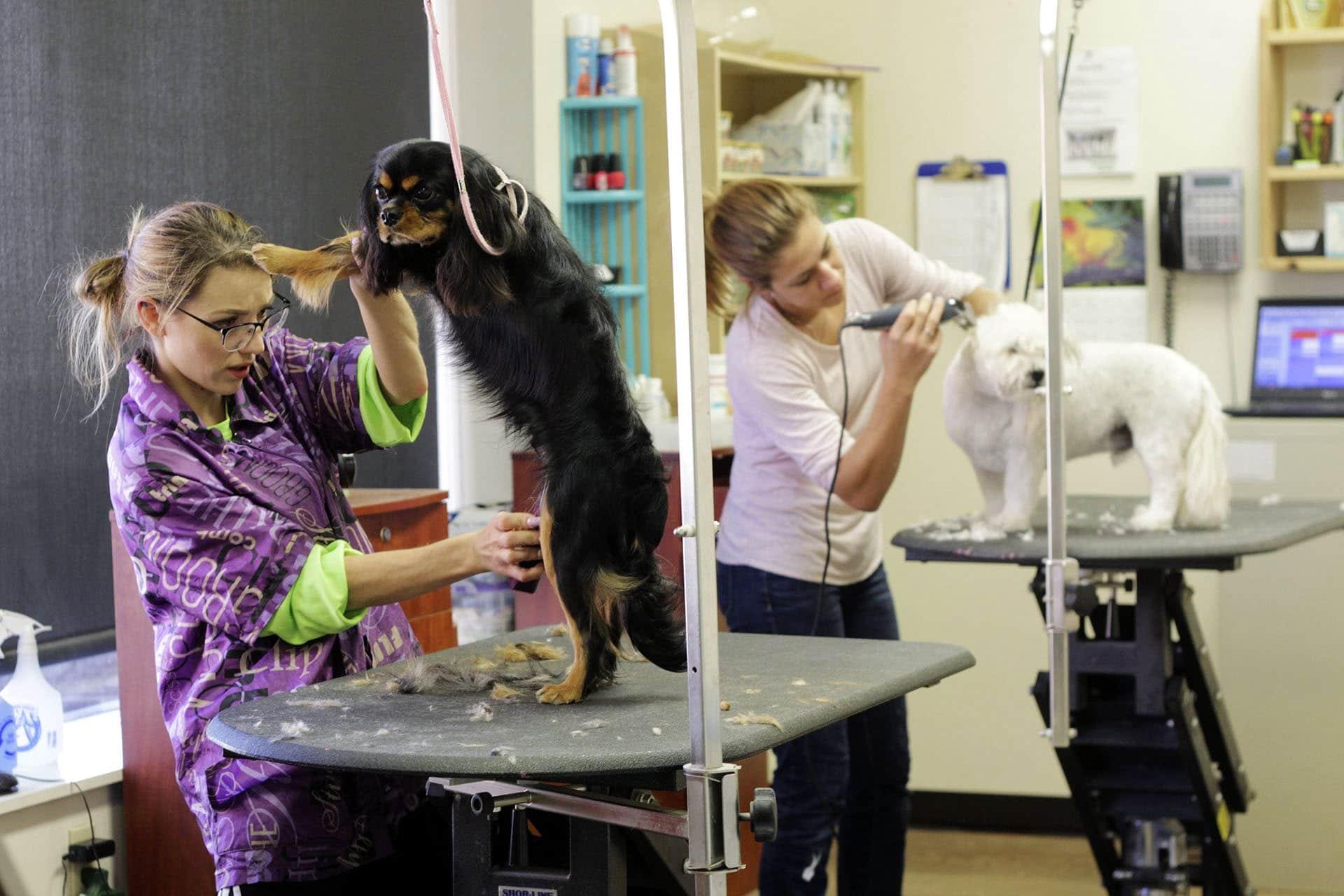 Szükséges-e kutyáinkat kutyakozmetikushoz vinni?