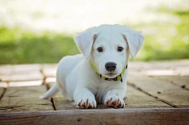 Megéri-e kutyát tartani?