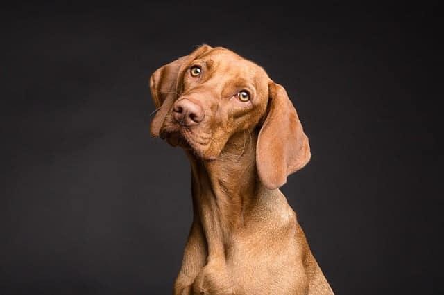 Milyen kutyát válasszak?