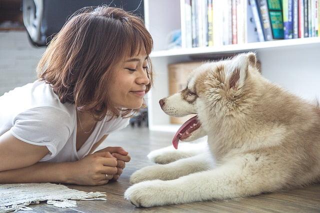 Így mutatja ki a kutyád, ha szeret téged