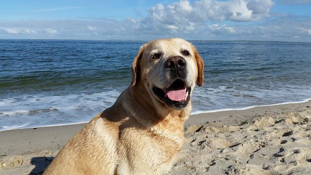 Kutya a strandon