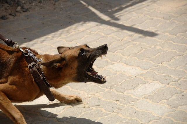 Mit tegyek, ha a kutyám agresszív a vendégekkel?