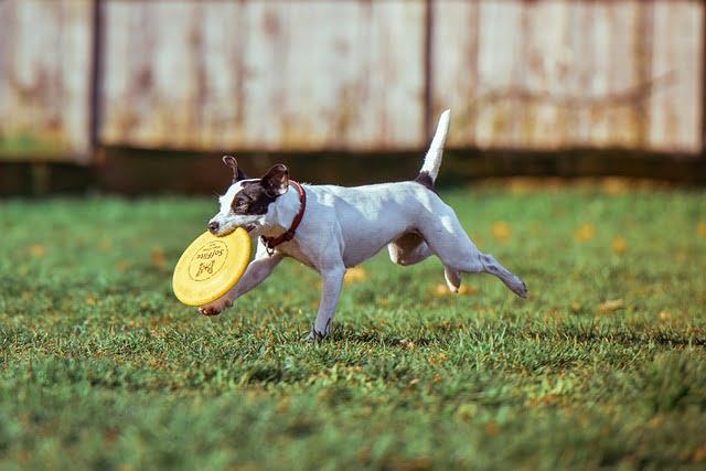 Kutya keveset mozog