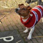 kutya pulover 150x150 -