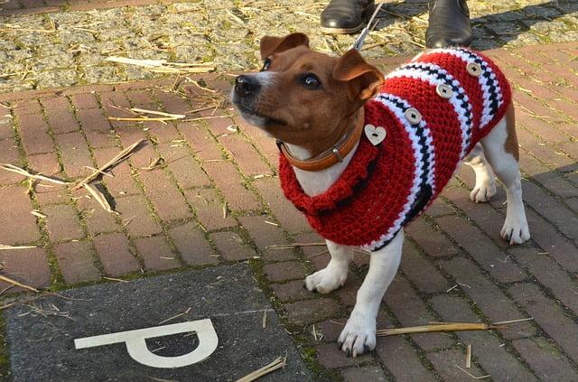 Kutya öltöztetése