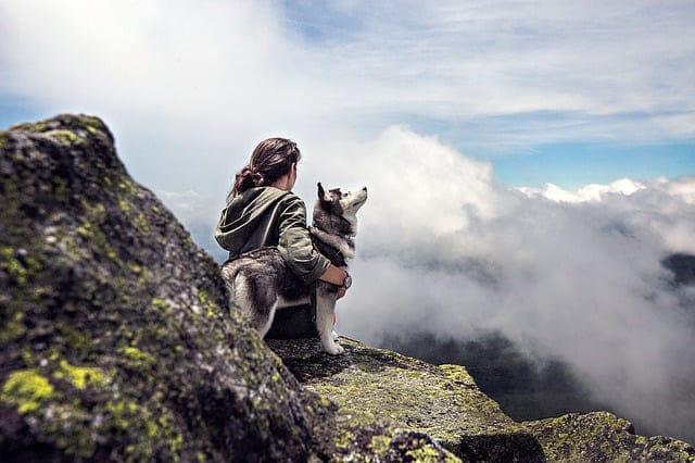 husky - 59 kutyanév a husky típusú kutyafajtáknak!