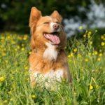 kutya csipes 150x150 -