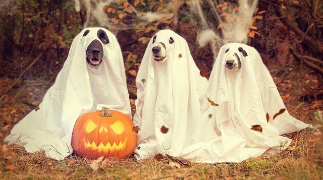 Kutya őszi veszélyek