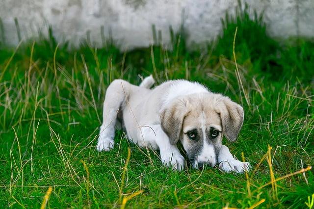 Beteg a kutya