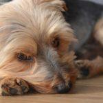 kutya etvagytalan 150x150 -