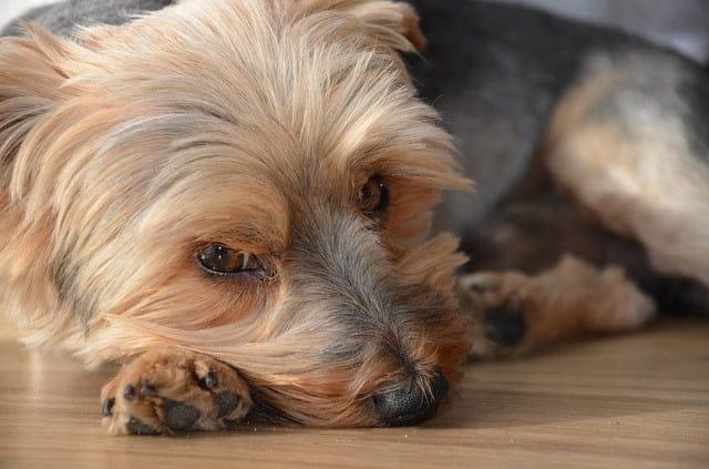 Kutya étvágytalanság