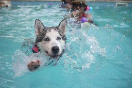 Kutya úszás