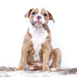 Kutya vezényszavak