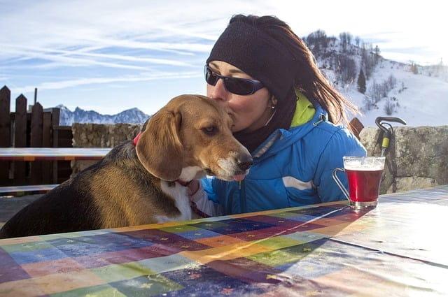 Beagle a családban - 57 kutyanév a beagle típusú kutyafajtáknak!