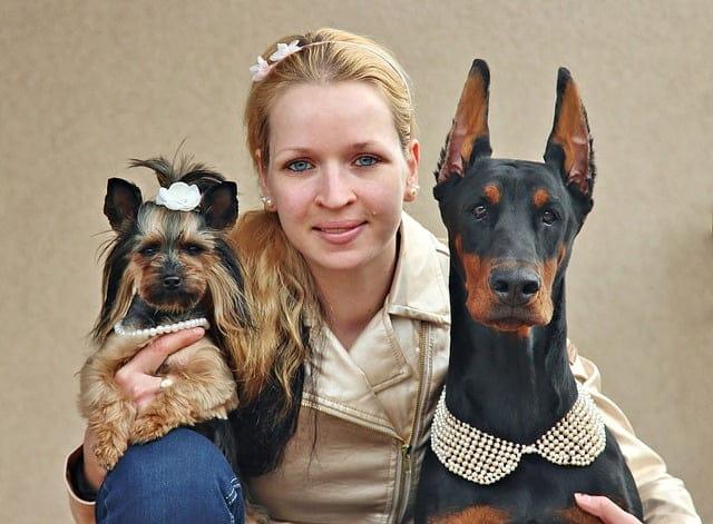 Kutyaszitterek-kutyasétáltatás
