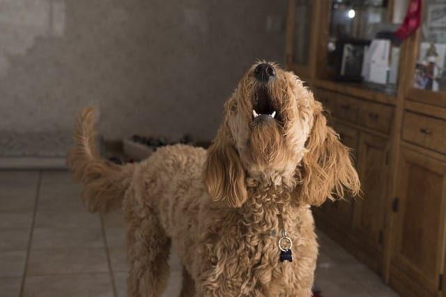 Mitől félnek a kutyák 4 jellegzetes kutyafélelem és fóbia  - Mitől félnek a kutyák? 4 jellegzetes kutyafélelem és -fóbia