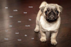 kiskutya nevek listája 300x200 -