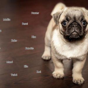 kiskutya nevek listája 300x300 - Kiskutya nevek listája, hogy könnyebb legyen a névválasztás!